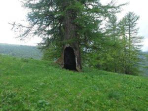 albero-cavo