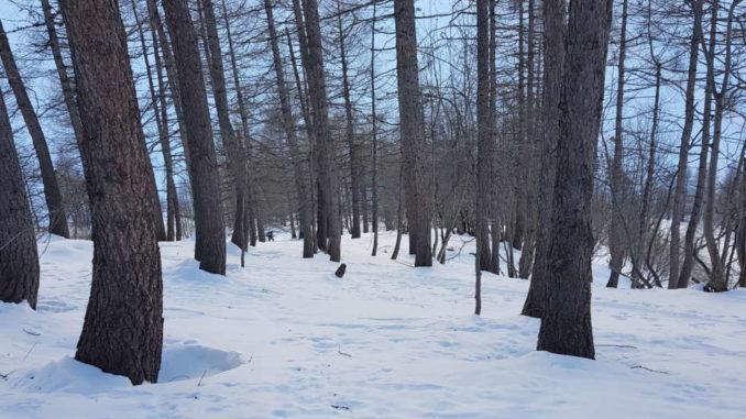 Saliamo nel bosco