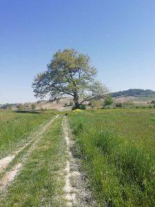 Sentiero tipico delle colline